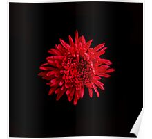 Red Mum Portrait. Poster