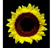 Sunflower Portrait. Photographic Print