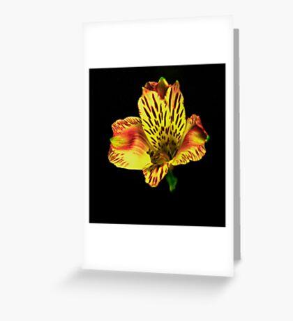Yellow Peruvian Lily Portrait. Greeting Card