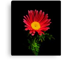 Red Daisy Portrait. Canvas Print