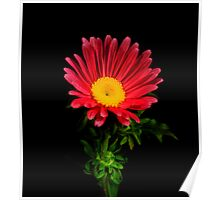 Red Daisy Portrait. Poster