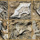 Gozo Island Fossils by Trish Meyer