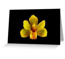 Yellow Cymbidium Portrait.  Greeting Card