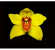 Yellow Cymbidium Portrait #2. Photographic Print