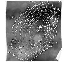 Spider Web Shades of Grey Poster