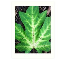 Maple leaf large Art Print