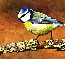 Wild nature - blue tit by Wiedzminka