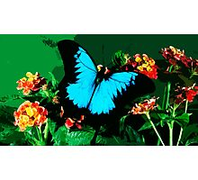 Wild nature - butterfly blue Photographic Print