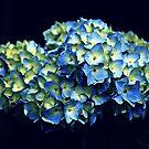 Electric Blue by Kelly Chiara