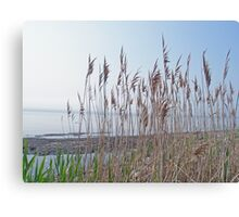 Island Beach State Park - New Jersey - Bay Side Canvas Print