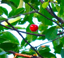 Wild Cherry by MarianBendeth
