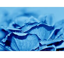 Blue Dew Photographic Print