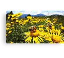 Wild nature - bees Canvas Print