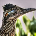 Roadrunner Portrait  by Saija  Lehtonen