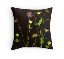 Astrantia Throw Pillow