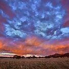 Rainbow on Fire by Jill Fisher