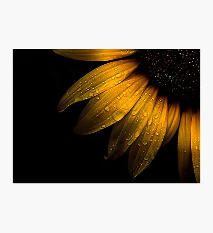 Backyard Flowers 28 Sunflower Photographic Print