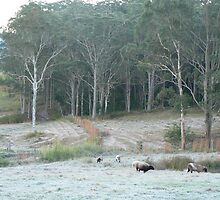 Frosted Woollys by louisegreen