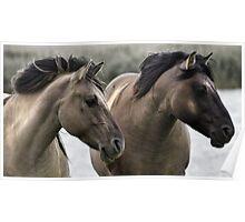 Polish Konik Horses Poster