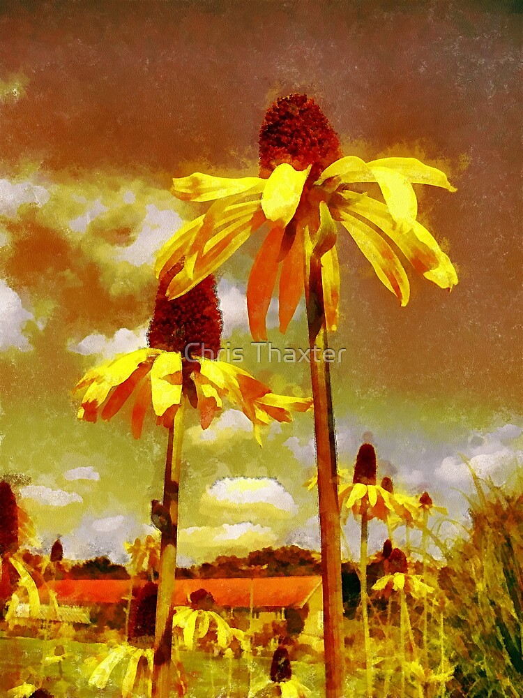 Yellow Echinacea  Van Gogh style by Chris Thaxter