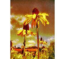 Yellow Echinacea  Van Gogh style Photographic Print