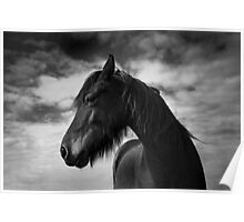 Wind Swept (Horse 1-5609/2) Poster