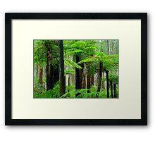 Black Spur Forest. Framed Print