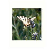 Swallowtail on Lavender Art Print