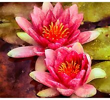Pink Water Lilies Photographic Print