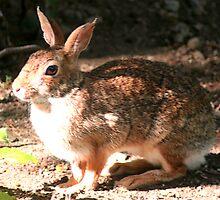 Wild Rabbit by Tori Snow