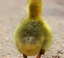 Run ducky run! by bluetaipan