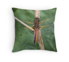 Scarce Chaser dragonfly Throw Pillow