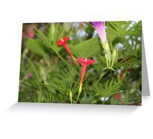 Cypress Flower Greeting Card