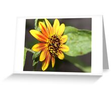 Sunrise in the Sunflower Greeting Card