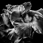 Backyard Flowers In Black And White 2 by Brian Carson