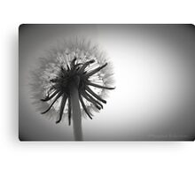 Dandelion Daydreaming Canvas Print