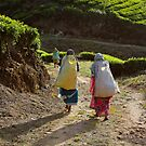 Monday is here. Tea time it is by Antony Pratap