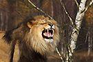 I'm the King! by Jo Nijenhuis
