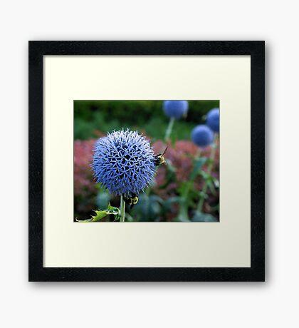 Spiked Blooms 2 Framed Print