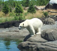 A Big White Bear by jesusmyjoy