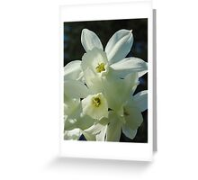 Daffodils 1 Greeting Card