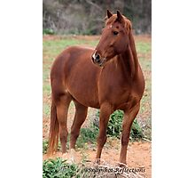 Horse of course  Photographic Print