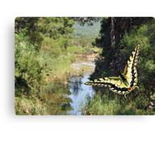 Fly Past Canvas Print