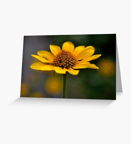 Natures Beauty ~ flower head Greeting Card