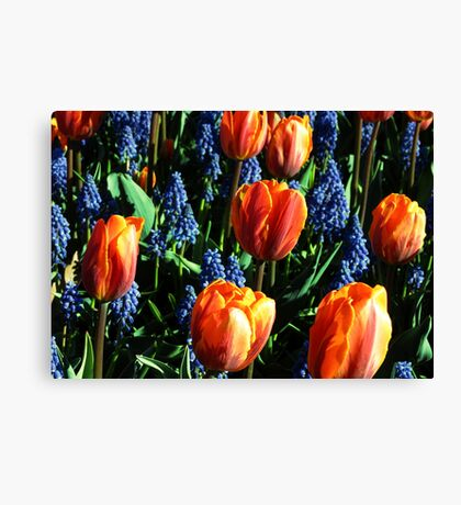 Tulips 12 Canvas Print