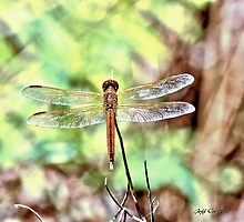 DragonFly  (HDR) by Jeff Ore