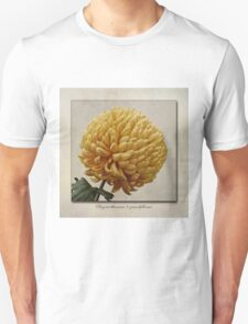Chrysanthemum grandiflorum Yellow T-Shirt