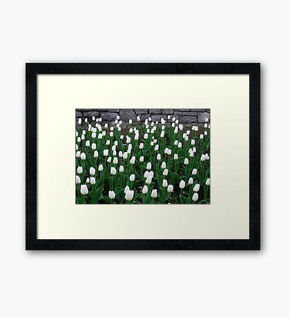 Tulips 10 Framed Print