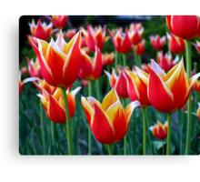 Tulips 3 Canvas Print