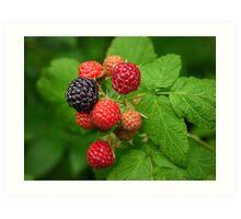 Mixed Berry Art Print